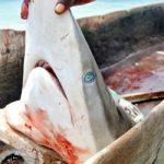 La pesca degli squali in Kenya