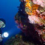 """La biblioteca della subacquea e' visitabile a """"Santa"""""""