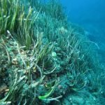 "Citizen Science Platform ""Observador del mar"" – Seawatchers Italia per le Alghe Aliene"
