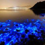La bioluminescenza