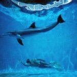 Dopo Le Grand Bleu, un film celebra l'Uomo Delfino, il free diver che ha rivoluzionato il mondo dell'apnea  DOLPHIN MAN