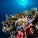 """Cavallucci marini, paguri, meduse e specie """"aliene"""": nel Regno di Nettuno i cittadini diventano """"scienziati"""""""
