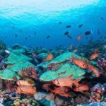 Le immersioni nelle Isole di Tahiti in mostra a Bologna