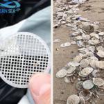 Filtri di plastica invadono Capri,Ischia, Fregene, Anzio e Talamone,