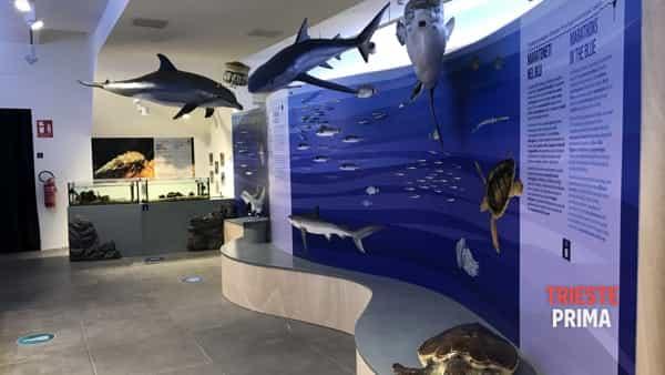 Ecco il BioMA, il museo dedicato alla biodiversità marina del Golfo di Trieste