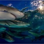 Incontro con gli squali alle Bahamas