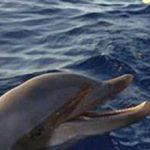 I delfini da combattimento addesatrati da Mosca e Washington