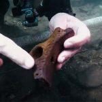 I segreti sottomarini del Lago di Bolsena